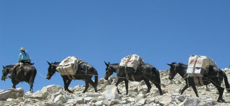 High Sierra Pack Trips